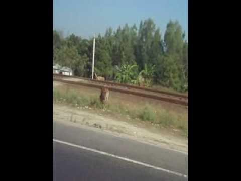 Bangladesh_14.AVI