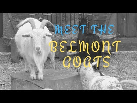 Belmont Goats at University Park