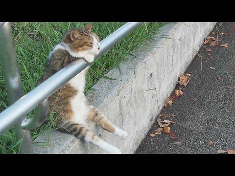 Wyluzowany kot