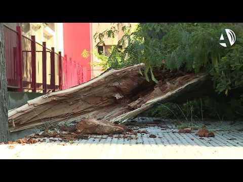 La tormenta de este domingo derriba una veintena de árboles en el parque Tío Jorge de Zaragoza