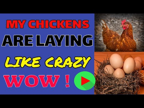 � MY CHICKENS ARE LAYING LIKE CRAZY!! (2019)