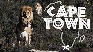 AFRIQUE DU SUD - Le Roi de la Savane