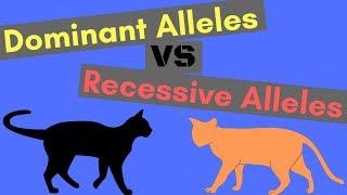 Dominant Alleles vs Recessive Alleles | Understanding Inheritance
