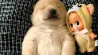 O cão mais fofo do Mundo! Tá Bonito