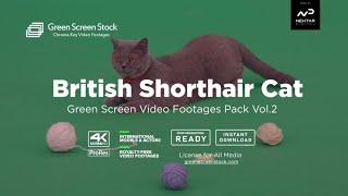 Green Screen Cat. Green Screen Animals - 👽 Green Screen Video Footage Pack