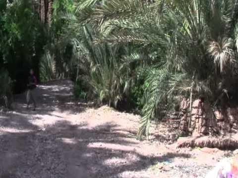 Green and lush. Morocco. 2011. Parte VI.