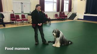 Kennel Club Good Citizenship Gold Award | Bodhi The Beardie