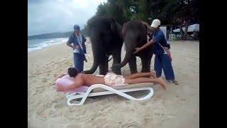 Masaj thailandez cu elefanti