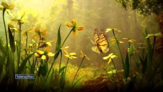 Butterfly Waltz - Brian Crain & Rita Chepurchenko (Emotional video)