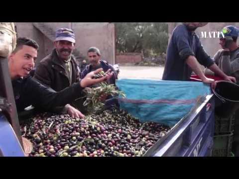 Video : Huile d'olive : La tradition oléicole d'El Kelaâ des Sraghna