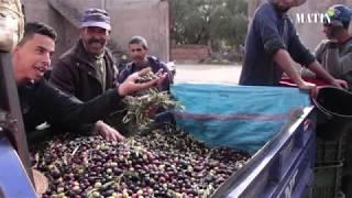 Huile d'olive : La tradition oléicole d'El Kelaâ des Sraghna