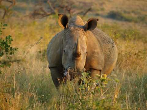 Kwalucia Private Safari Retreat.wmv