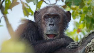 Walk in the footsteps of Jane Goodall with Google Maps