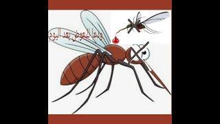 خلطة رهيبة لقضاء علي البعوض أو الناموس 🐜goodbay mosquitoes