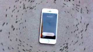 Ants Circling My Phone - iphone ant control - Ameisen umkreisen iphone
