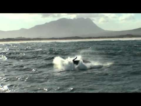 Amazing Whales Breaching in Hermanus – South Africa