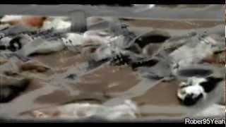 Porta - Animales Racionales (VideoClip HD)