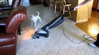 Happy Hoodie Muffles The Sound Of The Vacuum