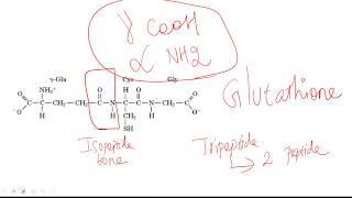 Isopeptide bond width=