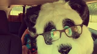 Panda Panda (Halloween Edition 2017)