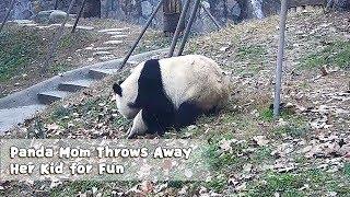 Panda Mom Throws Away Her Kid for Fun | iPanda