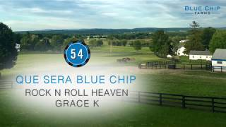Hip #54 QUE SERA BLUE CHIP