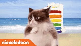 Grumpy Cat Dances To 'Cake By The Ocean' By DNCE