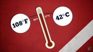 [TED Ed Vietsub] Điều gì xảy ra khi bị say nóng? - Douglas J. Casa