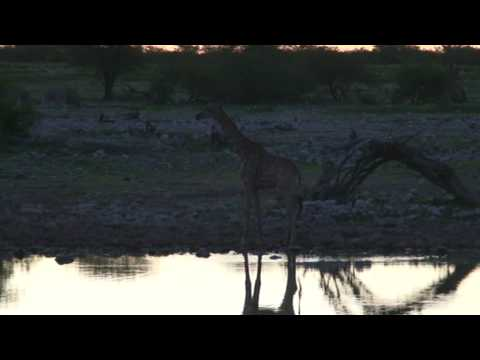 South Africian waterhole