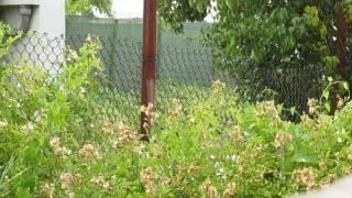 Каба гайда - родопска песен