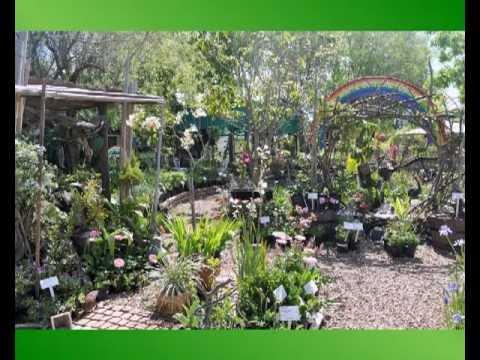 Цветочный магазин в Кейптауне. Rainbow plants. Cape Town
