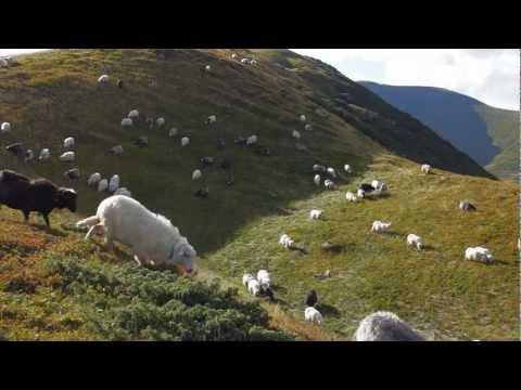 penguin-cafe-orchestra-beanfields-supersuperka