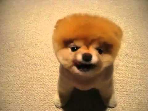Cute Puppy, Fluffy