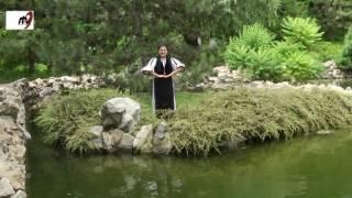 Paula Medrea  - Bate vantul iedera