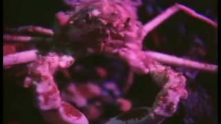 Snapper - Buddy (Music Video)