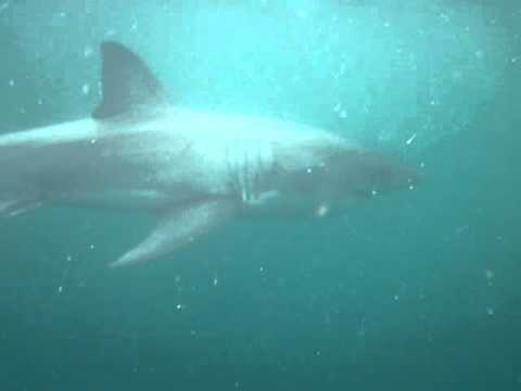 sharkcagediving-gaansbaai1.mov