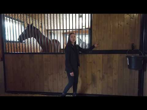 women in front of horse stall