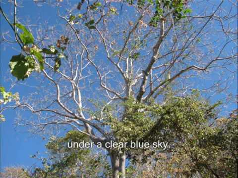 Cosiguina Natural Reserve