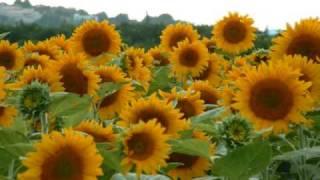 Cal que neixin flors a cada instant