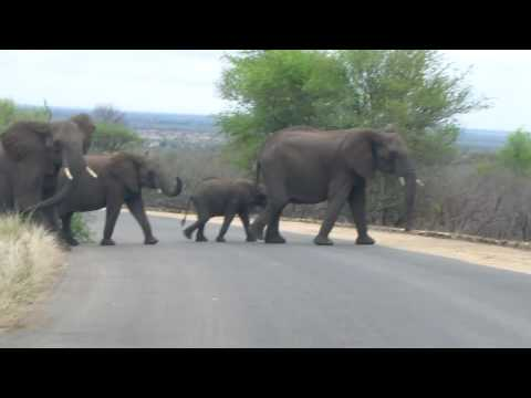 Kruger Nat'l Park Elephants