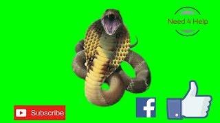 Green screen king cobra snake (Need 4 Help)