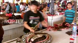 Indonesia: Blow torched dogs and skewered rats - see the world's wildest market - GRAPHIC