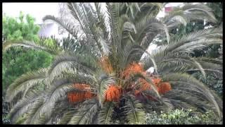 """Florbela Espanca -""""Ao vento"""" / """"To the wind"""""""