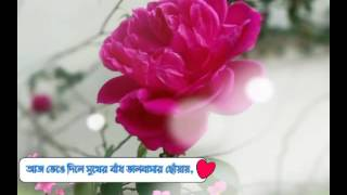 Valentine wish with nice song(ভেলেন্টাইন উইশ) video mad by shakil rehan