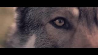 Bring Me The Horizon - The Fox And The Wolf