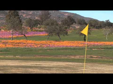 Springbok Flowers