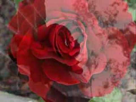 DizilerBurada.com Kırmızı Güller.