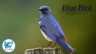 Blue Bird (Hip-Hop Beat)