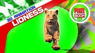 Green Screen Animals Lioness Run Loop - Footage PixelBoomCG