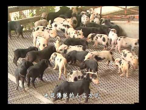 康軒社會四下3-1 農牧業和漁業 - YouTube